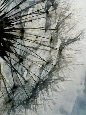 Digital Art - The Dandelion Silhouette by Steve Taylor