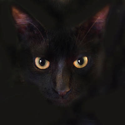 Black Cat Photograph - The Dark Cat by Gina Dsgn