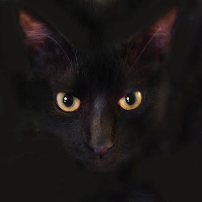 Animals Photos - The Dark Cat by Gina Dsgn