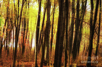 Jeffery Johnson Photograph - The Dark Forest Mood by Photo Captures by Jeffery