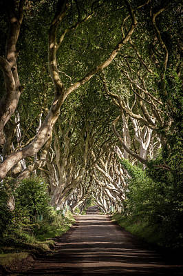Photograph - The Dark Hedges #2  by George Pennock