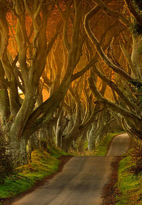 The Dark Hedges II Art Print