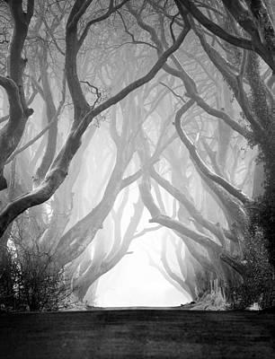 The Dark Hedges Iv Art Print