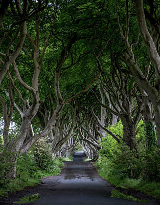 Photograph - The Dark Hedges - Kingsroad by Teresa Wilson