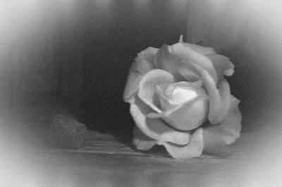 Photograph - The Dark Rose by Pamela Critchlow