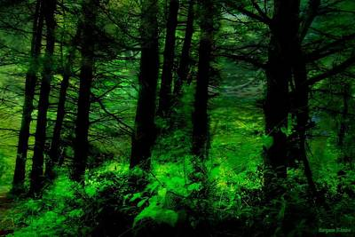 Photograph - The Dark Side In The Pines by Maryann DAmico