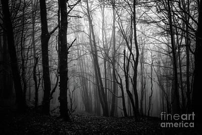 Suggestive Photograph - The Dark Woods by Mirko Chianucci