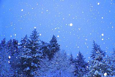 Photograph - The Dawn Of Winter Snow by Adria Trail