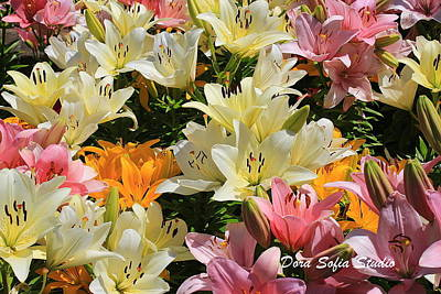 Photograph - The Daylilies Of Early Summer by Dora Sofia Caputo Photographic Art and Design