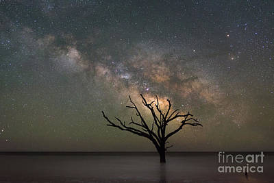 Surrealism Royalty-Free and Rights-Managed Images - The Dead Forest Milky Way 2x3 Ratio by Michael Ver Sprill