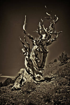 Photograph - The Dead Sentinel by Roger Passman