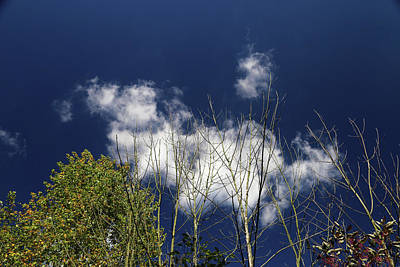 Photograph - The Dead The Living And Clouds by Mary Bedy