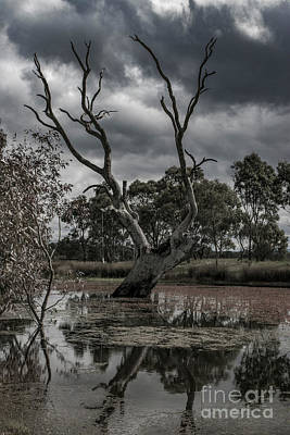 Photograph - The Dead Tree by Naomi Burgess