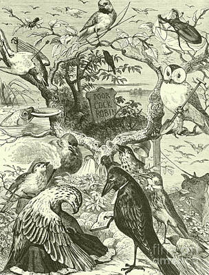 Nursery Rhymes Drawing - The Death And Burial Of Cock Robin by English School