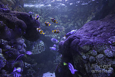 Clown Fish Photograph - The Deep by Anne Rodkin