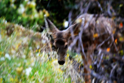 Photograph - The Deer by Nature Macabre Photography