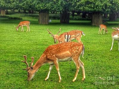 Dunham Massey Photograph - The Deer Park 2 by Joan-Violet Stretch