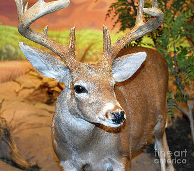 Photograph - The Deer by Ray Shrewsberry
