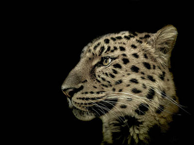 Leopard Wall Art - Photograph - The Defendant by Paul Neville