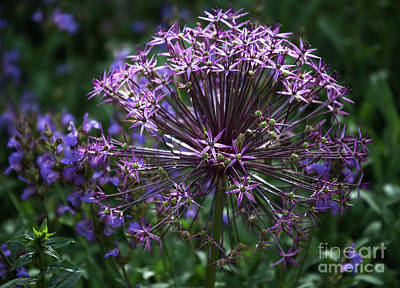 Inspirational Art Display Photograph - The Delicate Bloom Of My Heart by Roselynne Broussard