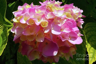 Photograph - The Delicate Pink Flowers by Jasna Dragun