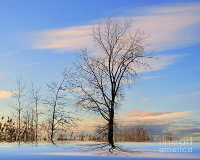 Photograph - The Delight by Elfriede Fulda