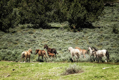 Photograph - The Departure, No. 1 by Belinda Greb