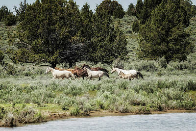 Photograph - The Departure, No. 4 by Belinda Greb