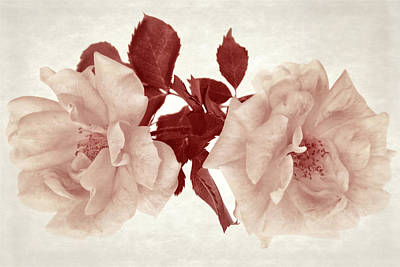 Photograph - The Depth Of Roses II by Leda Robertson