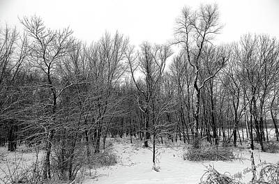 Photograph - The Depth Of Winter by Wild Thing