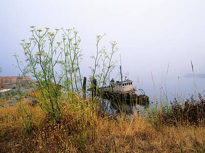 Photograph - The Derelict Mary D. Hume by Robert Potts