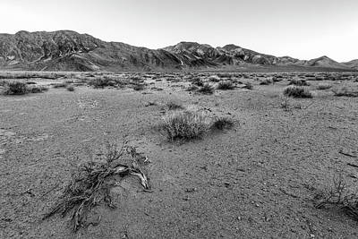 Photograph - The Desert Floor by Jon Glaser