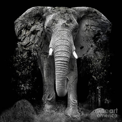 Large Mammals Photograph - The Disappearance Of The Elephant by Erik Brede