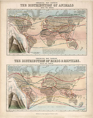 Reptiles Drawings - The Distribution of Animals, Birds and Reptiles - Zoological map - Historical Map by Studio Grafiikka