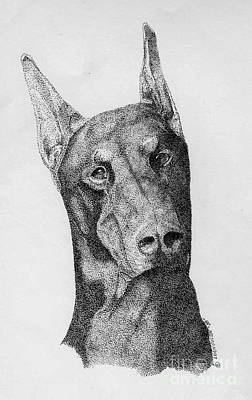 Doberman Drawing - The Doberman by Lucien Van Oosten