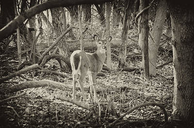 The Doe Art Print by Bill Cannon