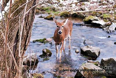 Photograph - The Doe From Snowy Creek by Tami Quigley