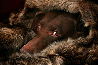 Weimaraner Photograph - The Dog by Heike Hultsch
