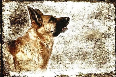 Photograph - The Dog Speaks by Angie Tirado