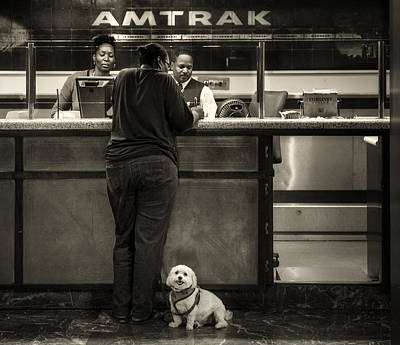 Photograph - The Doggy Wants A Seat By The Window.. by Michel Verhoef