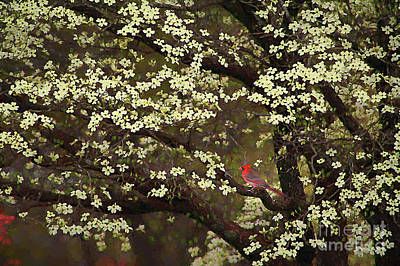 Animals Digital Art - The Dogwoods and the Cardinal by Darren Fisher
