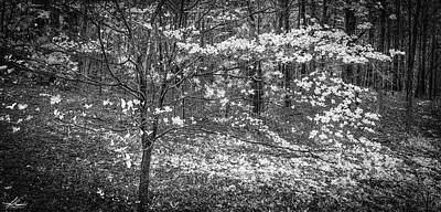 Photograph - The Dogwoods Are Blooming It Must Be Spring. by Phil Rispin