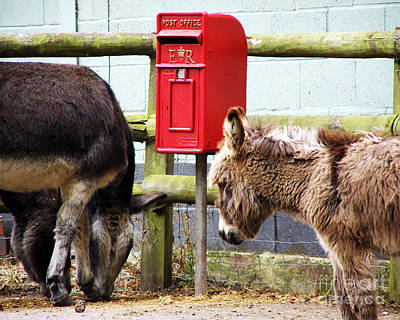 Photograph - The Donkey's Post Box by Terri Waters