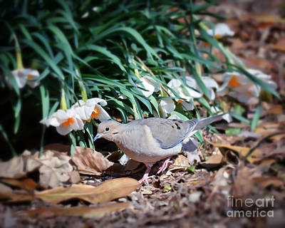 Photograph - The Dove And The Daffys by Kerri Farley