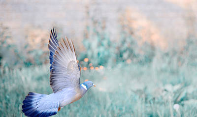 Message Art Photograph - The Dove Of Hope by Jenny Rainbow