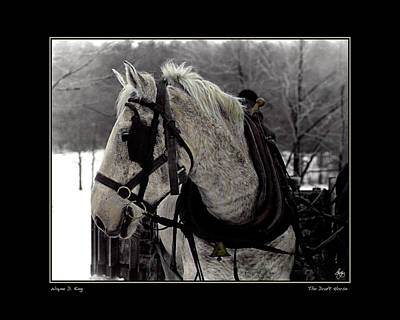 Photograph - The Draft Horse Poster by Wayne King