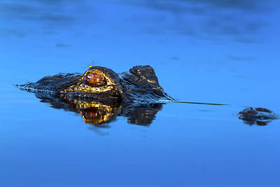 Alligator Photograph - The Dragon And The Dragonfly by Mark Andrew Thomas