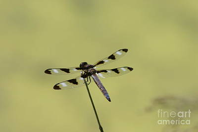 The Dragonfly Art Print by David Bishop