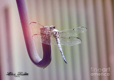 Photograph - The Dragonfly by Melissa Messick