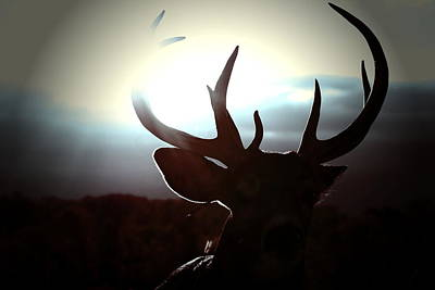 Monster Buck Photograph - The Dream by Emily Stauring